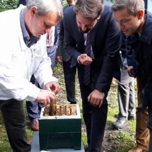 Besuch des Bienenlehrpfads
